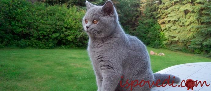 история о странном поведении кота