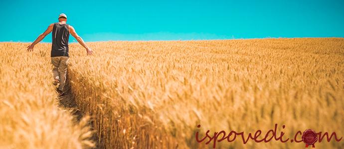 мужчина на пшеничном поле