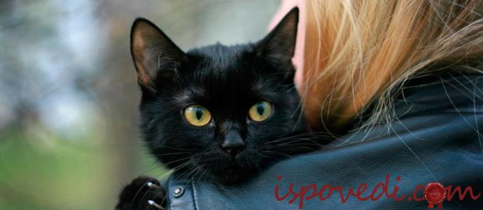 девушка с черным котом на руках