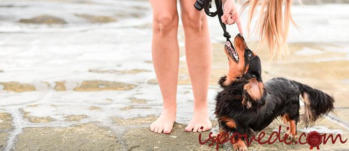 девушка ругает собаку