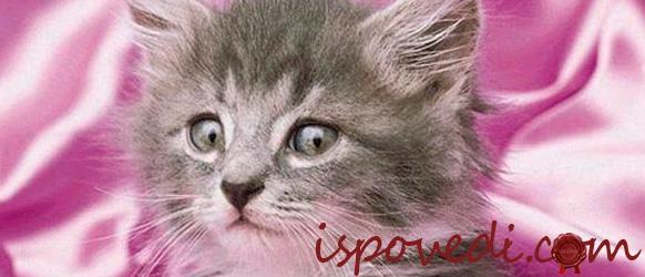 Милый пушистый котенок