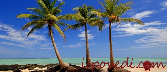 Пальмы на острове Нуси-Бе