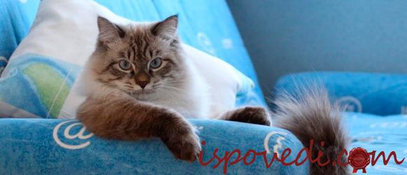Любимый кот на любимом диване