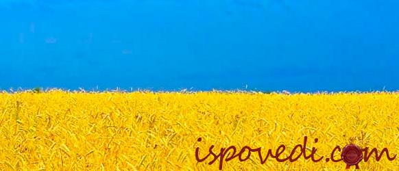 Цвета украинского флага для дедушки