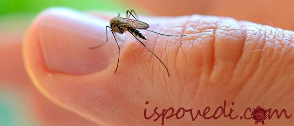 Комары не дают покоя