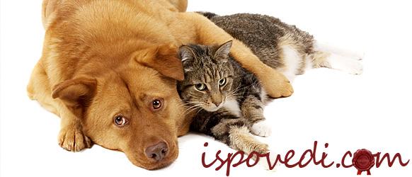 Как тяжело прощаться с домашними животными