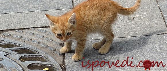 Рыжий бездомный котенок на улице