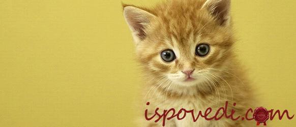 Несчастный котенок