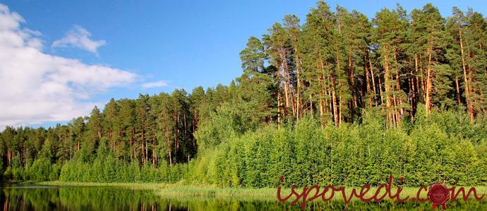 мистическая история про сосновый лес