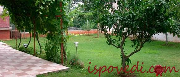 Ухоженный сад на даче
